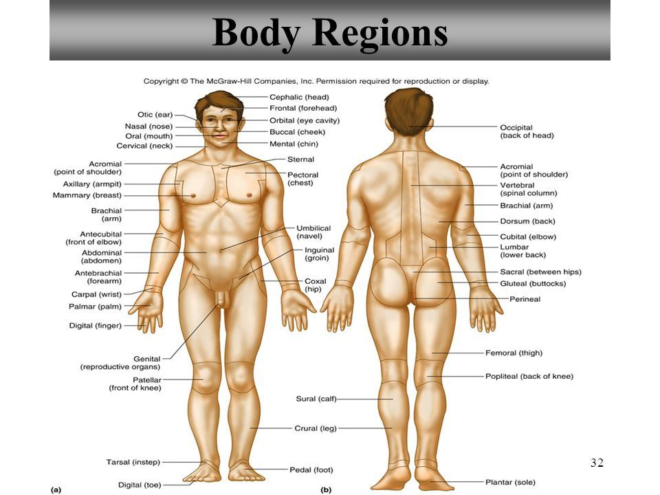 anatomy and physiology of the body Human anatomy & physiology general this course emphasizes the elationship between anatomy and physiology body works the.