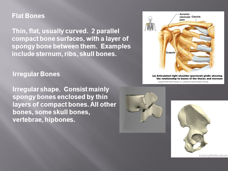 Chapter 5 Introduction To The Skeletal System Anatomy And