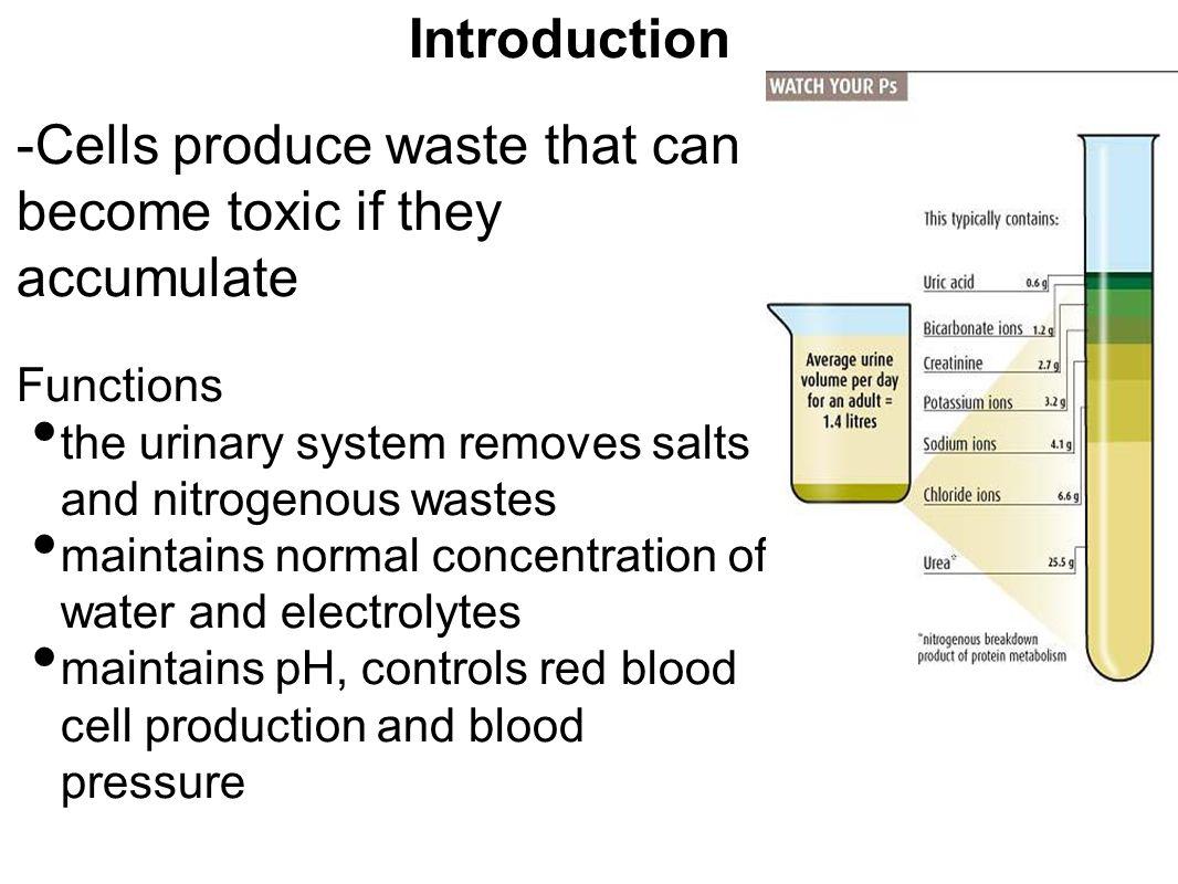 lab report endocrine system 28b