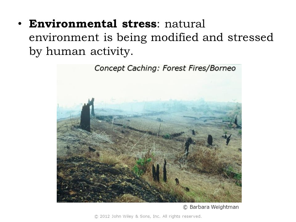 Environmental stress : natural environment is being modified and stressed by human activity.
