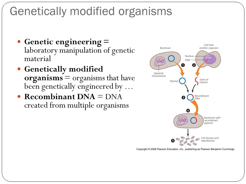 Genetically modified organisms Genetic engineering = laboratory manipulation of genetic material Genetically modified organisms = organisms that have been genetically engineered by … Recombinant DNA = DNA created from multiple organisms