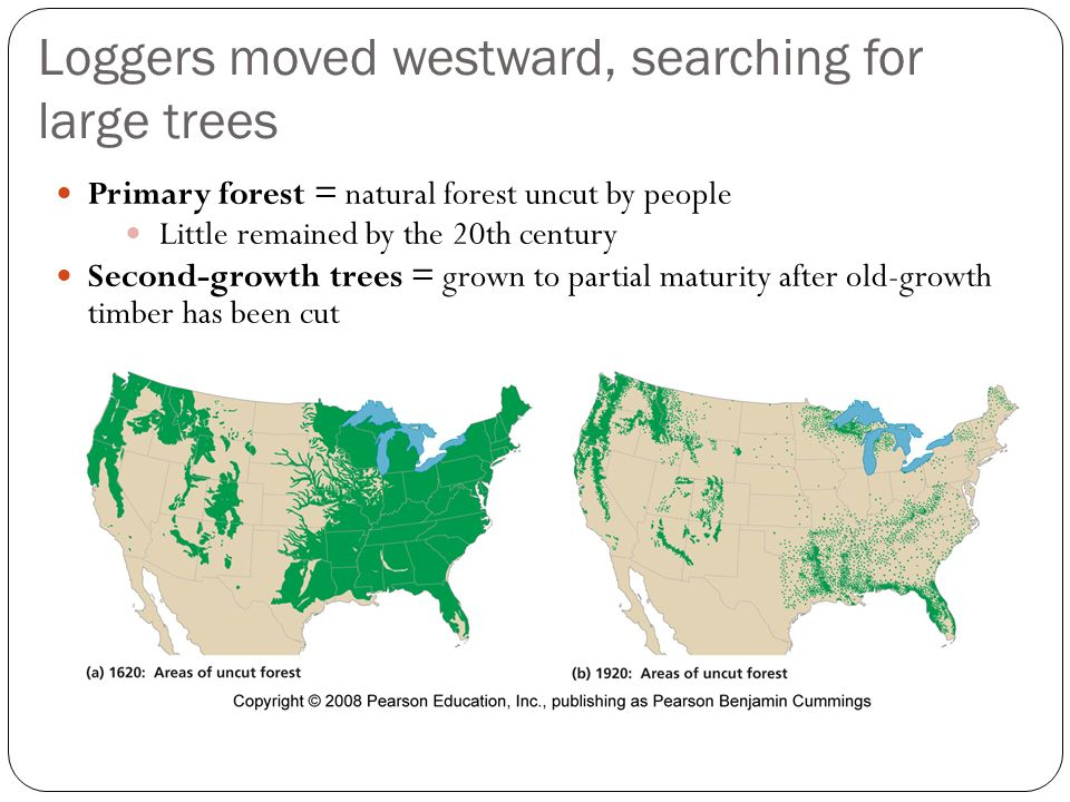 Loggers moved westward, searching for large trees Primary forest = natural forest uncut by people Little remained by the 20th century Second-growth trees = grown to partial maturity after old-growth timber has been cut