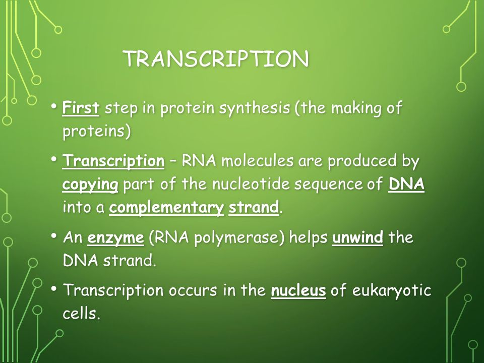 Ilration Shows The S Of Protein Synthesis In Three Transcription Rna Processing