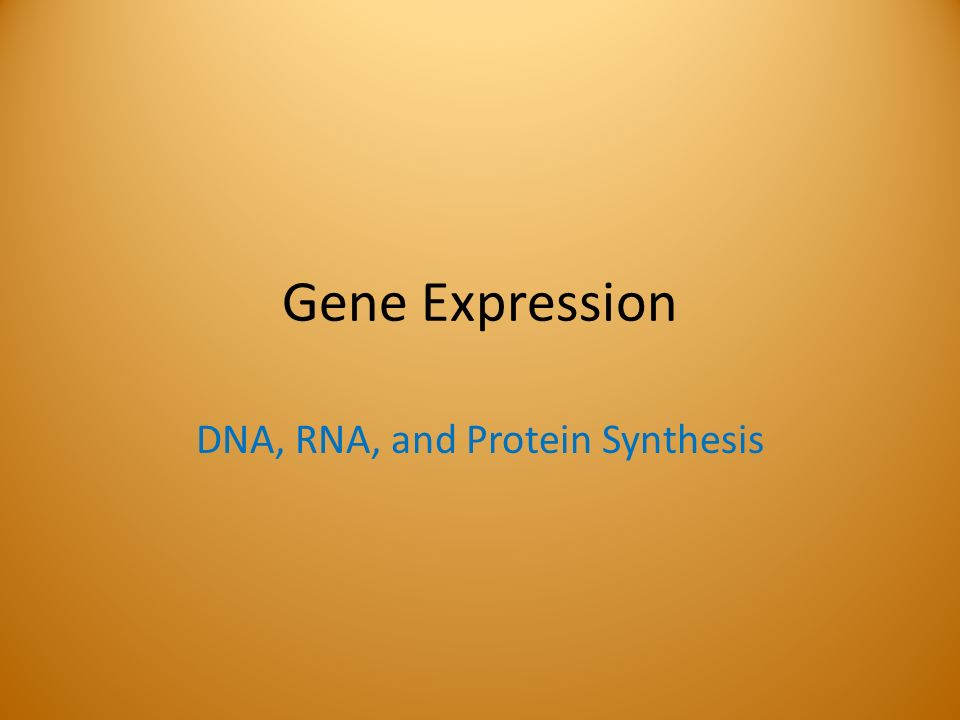 an analysis of the expression of a gene in protein synthesis L-arginine upregulates the gene expression of target of rapamycin signaling pathway and stimulates protein synthesis in chicken intestinal epithelial cells.