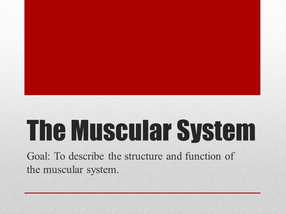 the muscular system goal: to describe the structure and function, Muscles