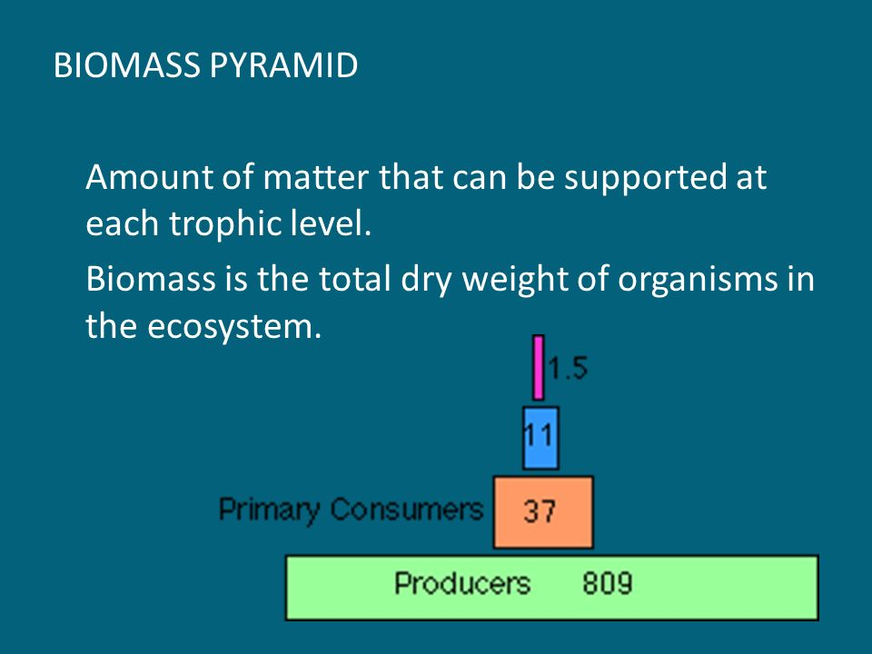 BIOMASS PYRAMID Amount of matter that can be supported at each trophic level.