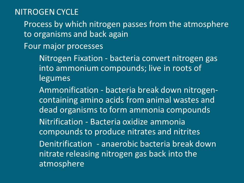 NITROGEN CYCLE Process by which nitrogen passes from the atmosphere to organisms and back again Four major processes Nitrogen Fixation - bacteria convert nitrogen gas into ammonium compounds; live in roots of legumes Ammonification - bacteria break down nitrogen- containing amino acids from animal wastes and dead organisms to form ammonia compounds Nitrification - Bacteria oxidize ammonia compounds to produce nitrates and nitrites Denitrification - anaerobic bacteria break down nitrate releasing nitrogen gas back into the atmosphere