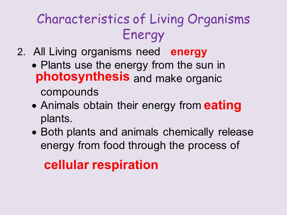 Characteristics of Living Organisms Energy 2.