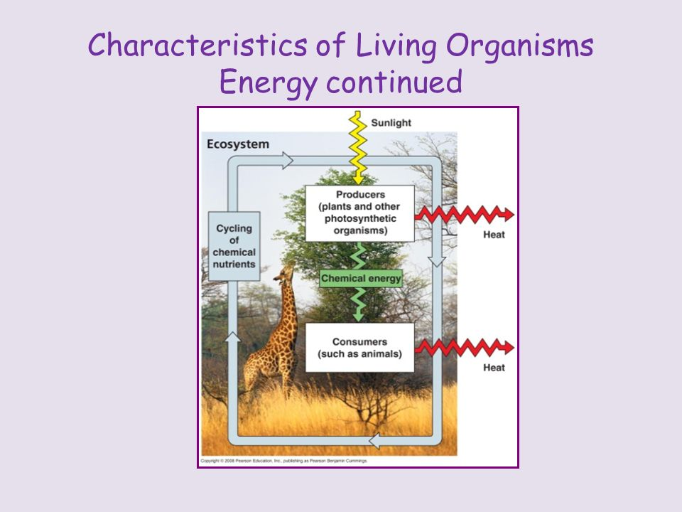 Characteristics of Living Organisms Energy continued
