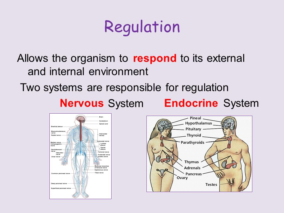 Regulation Allows the organism to to its external and internal environment Two systems are responsible for regulation System respond NervousEndocrine