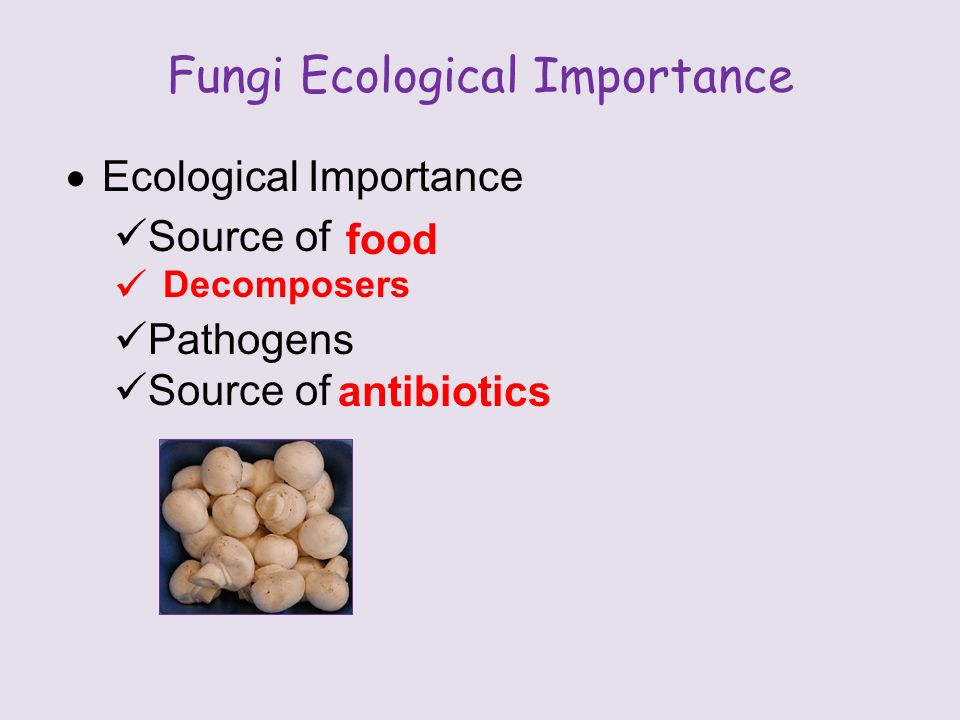 Fungi Ecological Importance  Ecological Importance Source of Pathogens Source of food Decomposers antibiotics