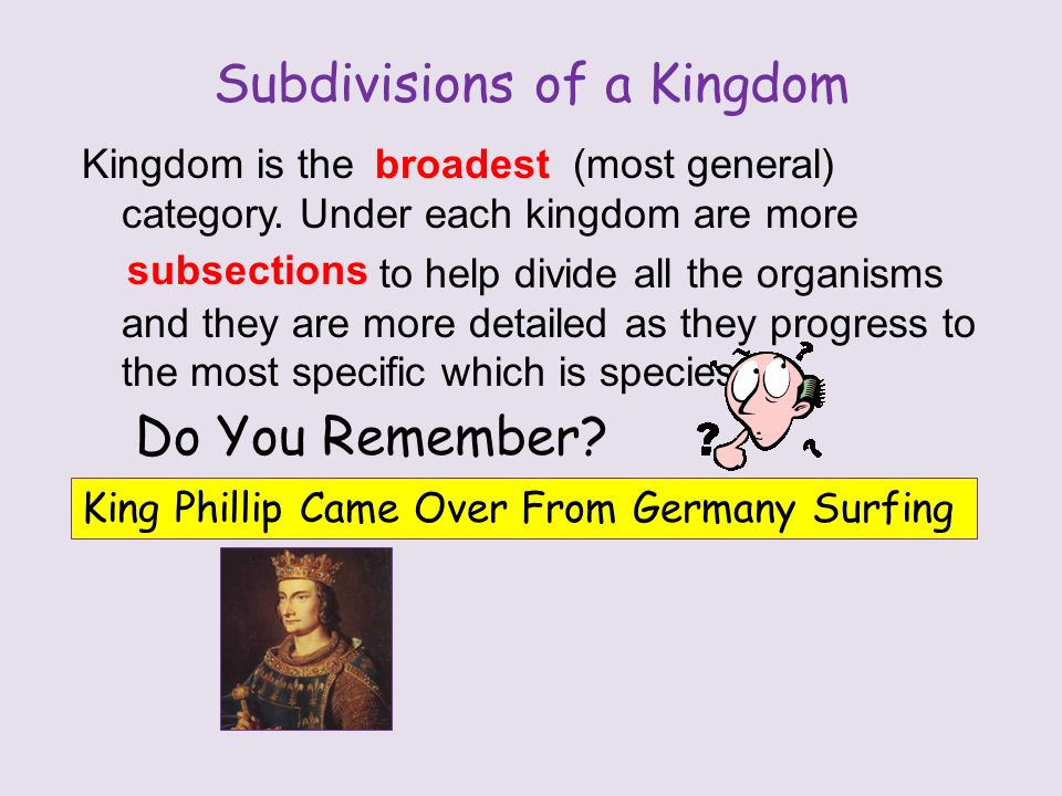 Subdivisions of a Kingdom Kingdom is the (most general) category.