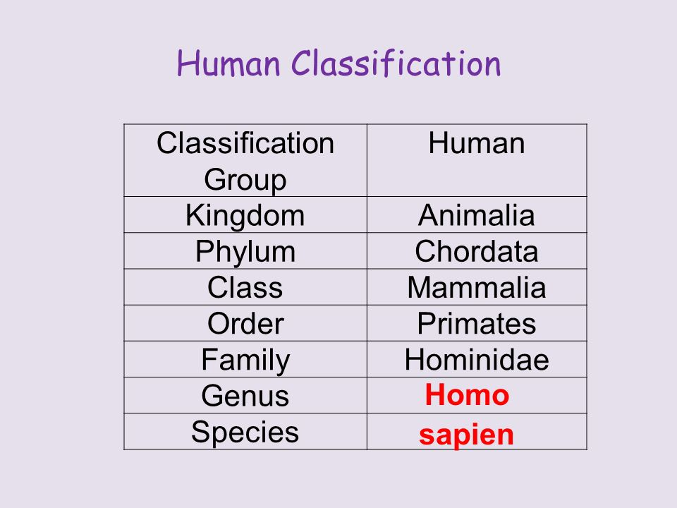 Human Classification Classification Group Human KingdomAnimalia PhylumChordata ClassMammalia OrderPrimates FamilyHominidae Genus Species Homo sapien