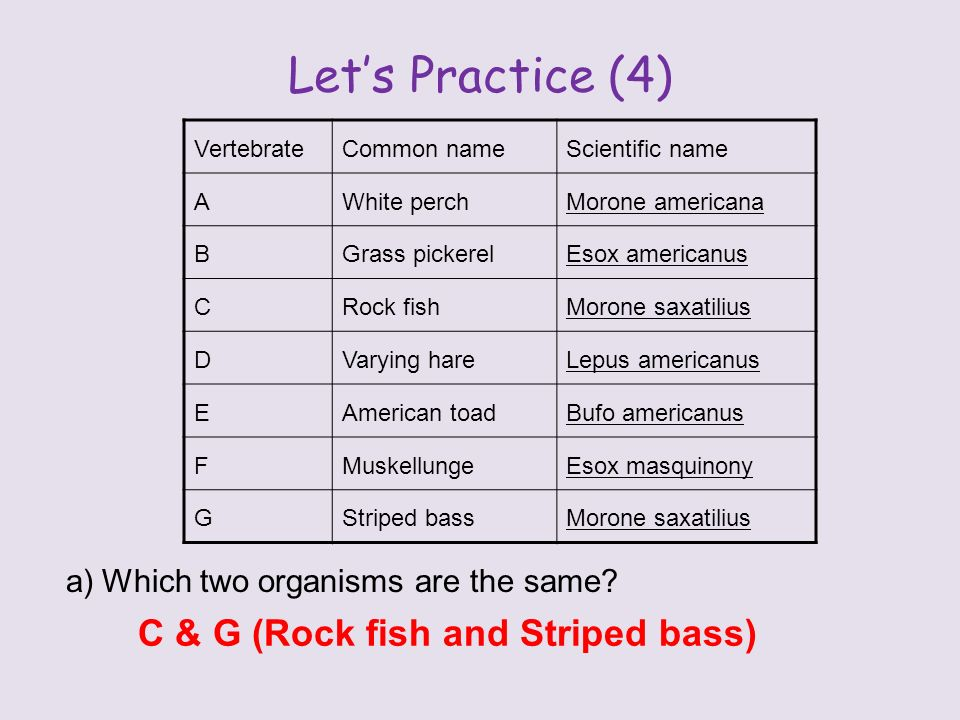 Let's Practice (4) a)Which two organisms are the same.
