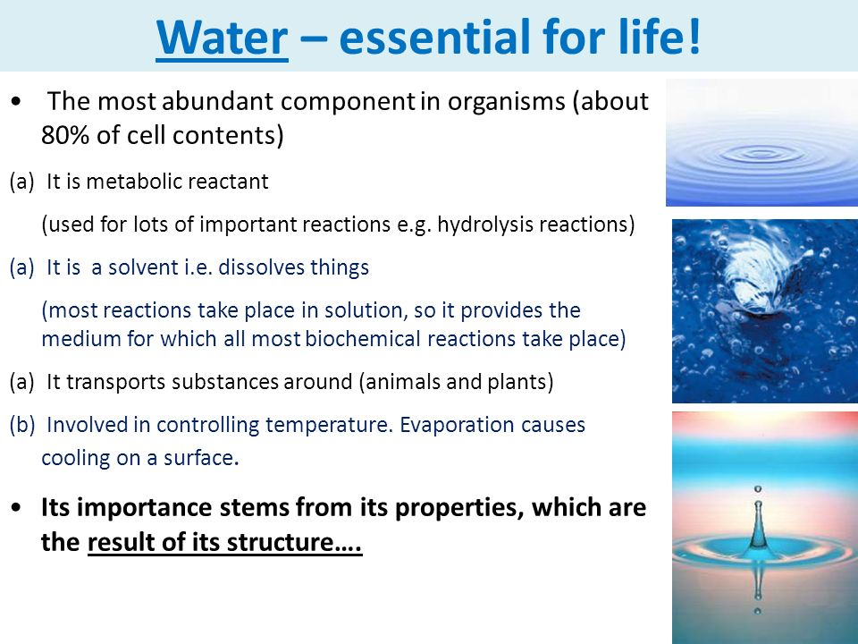 the importance of water in an individuals life The nutritional requirements of the human body change as we move through different life victorian government portal for older people  it is important to take.