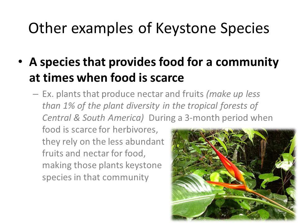 Unit 2 Lesson 7: Unit 2 Lesson 7: - Biodiversity - Endangered ...