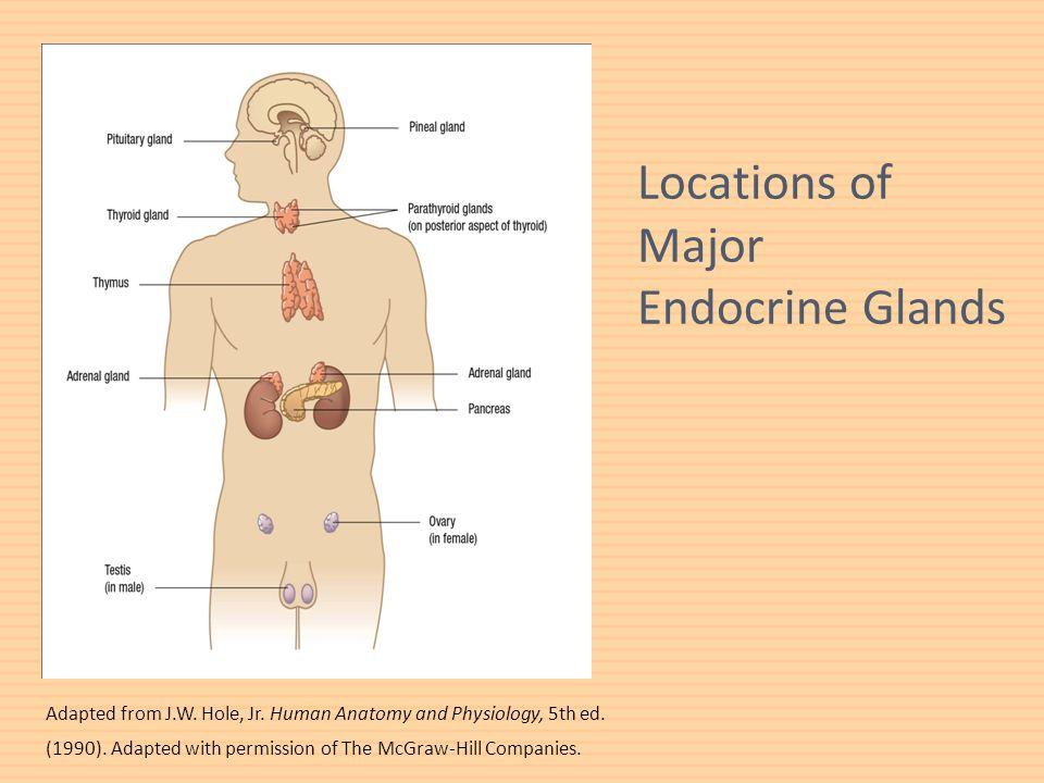 Increíble Hole Anatomy And Physiology Elaboración - Anatomía de Las ...
