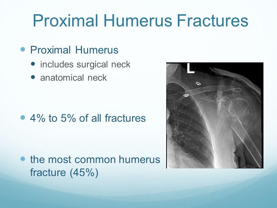 Erfreut Proximal Humerus Anatomy Fotos - Anatomie Ideen - finotti.info