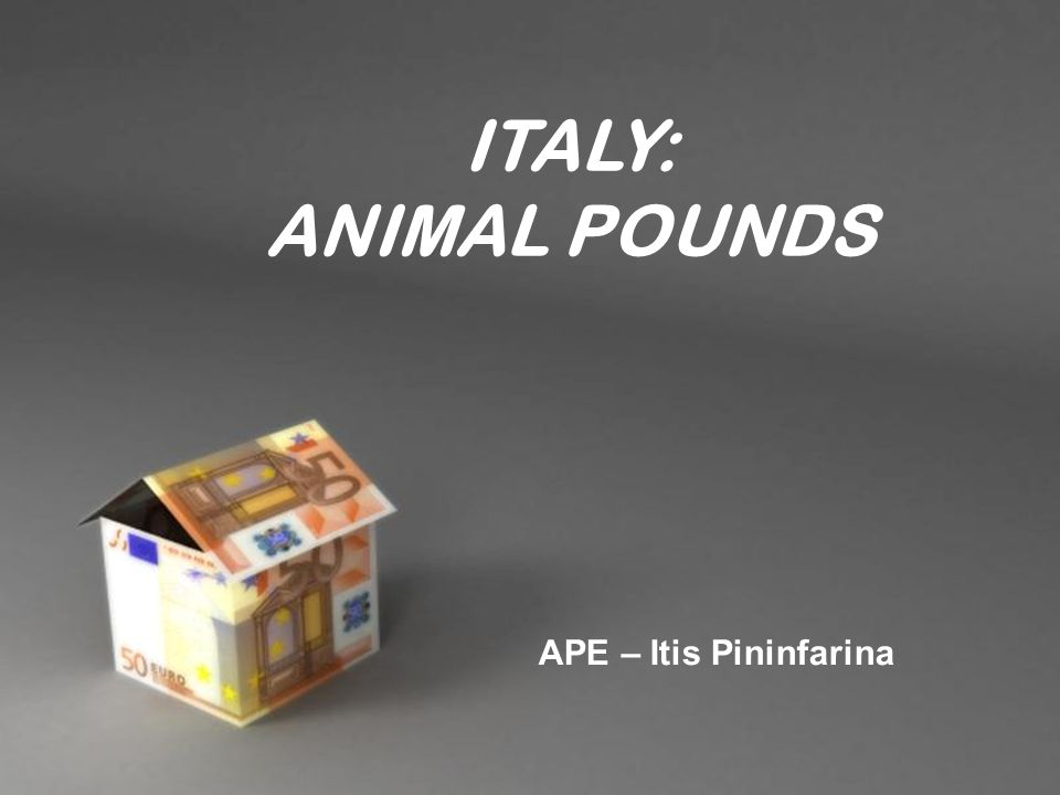 Powerpoint templates page 1 powerpoint templates italy animal 1 powerpoint templates page 1 powerpoint templates italy animal pounds ape itis pininfarina toneelgroepblik