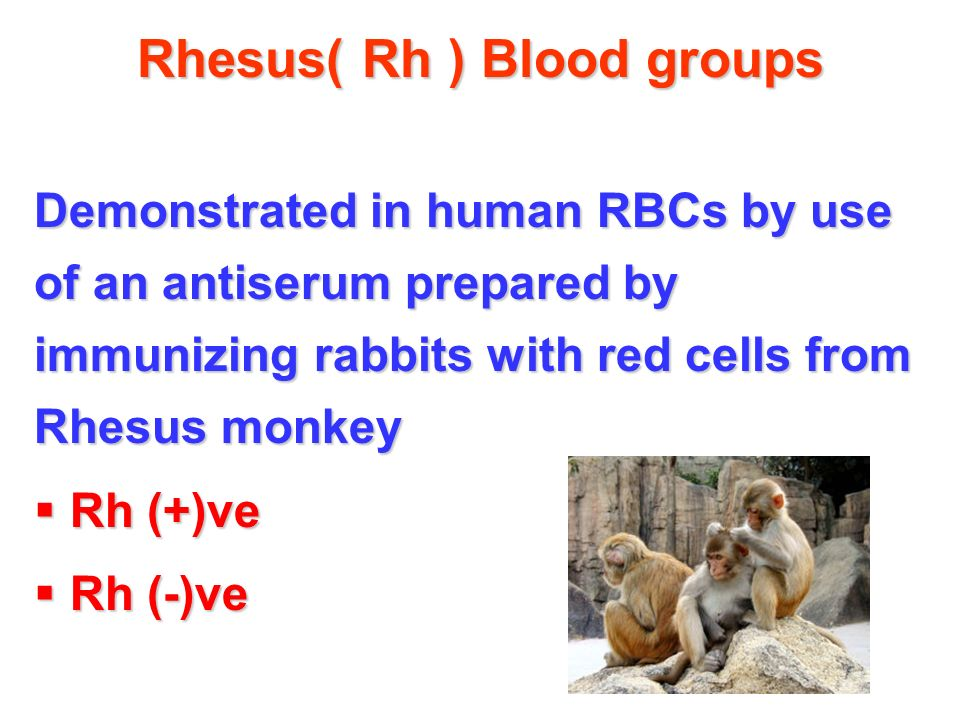 Rhesus( Rh ) Blood groups Demonstrated in human RBCs by use of an antiserum prepared by immunizing rabbits with red cells from Rhesus monkey  Rh (+)ve  Rh (-)ve