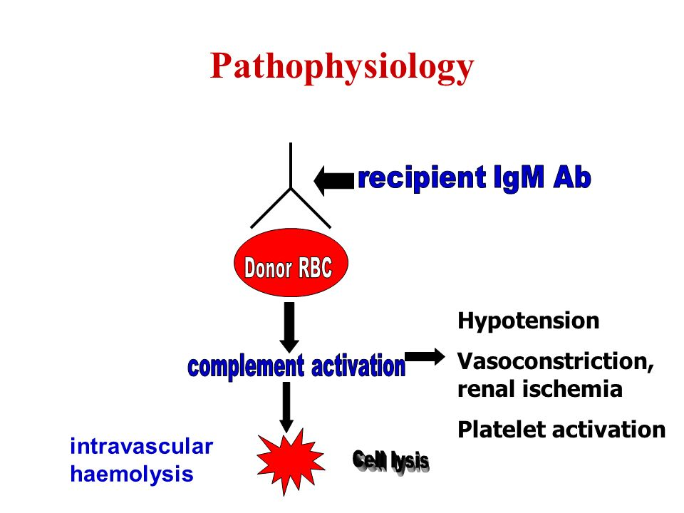 Pathophysiology Hypotension Vasoconstriction, renal ischemia Platelet activation intravascular haemolysis