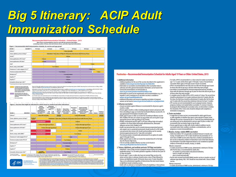 2 Big 5 Itinerary: ACIP Adult Immunization Schedule
