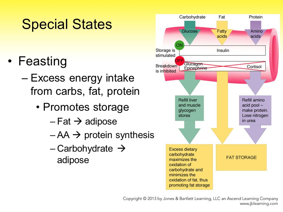Pathophysiology of weight loss in diabetes