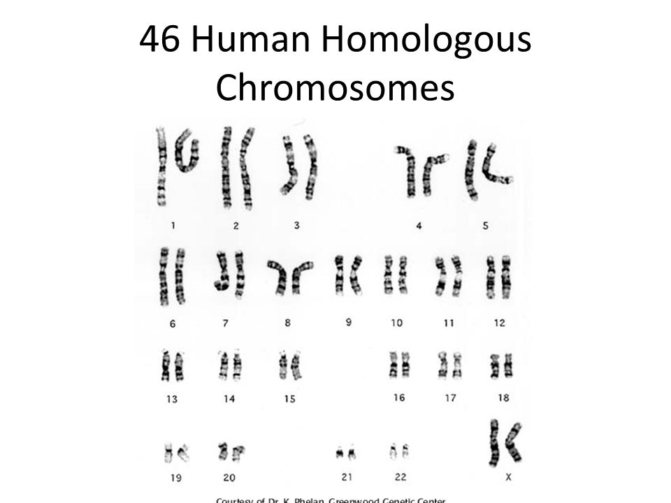 Human Body Cells 46 chromosomes arranged in 23 pairs – 23 chromosomes from each parent – Every cell in body contains a complete set of chromosomes.