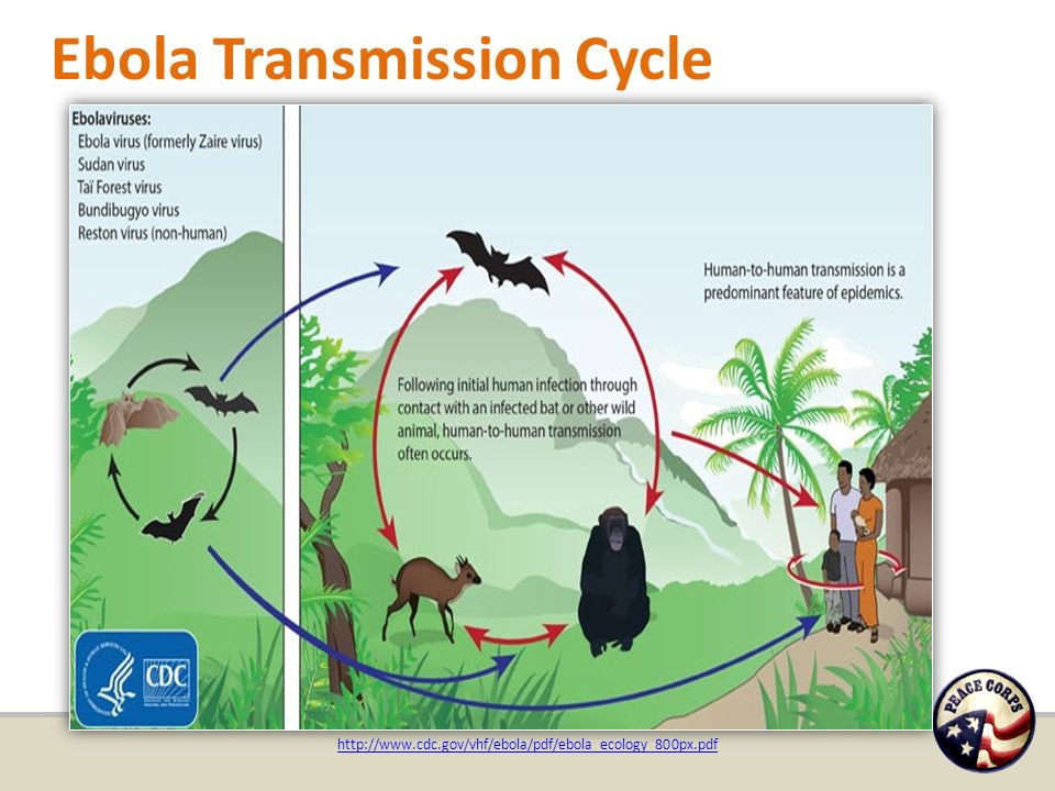 Figure 1: The Centers for Disease Control and Prevention's four steps to  early diagnose the cases of Ebola virus disease