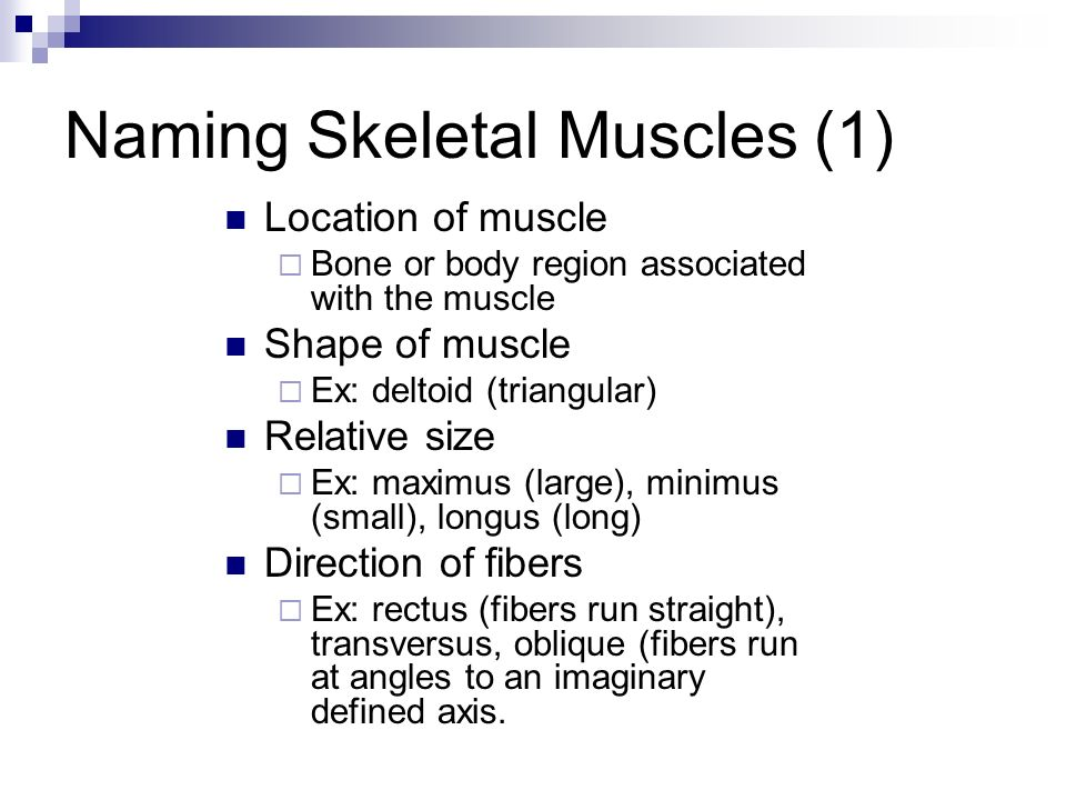the muscular system. muscles in the body there are over 650, Muscles