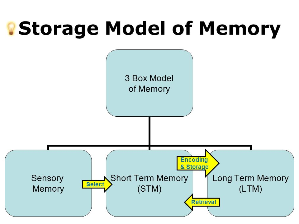 short term memory stm essay Strategies to improve memory  your brain holds an average of seven items in short term memory • long-term memory involves information you make an effort to.