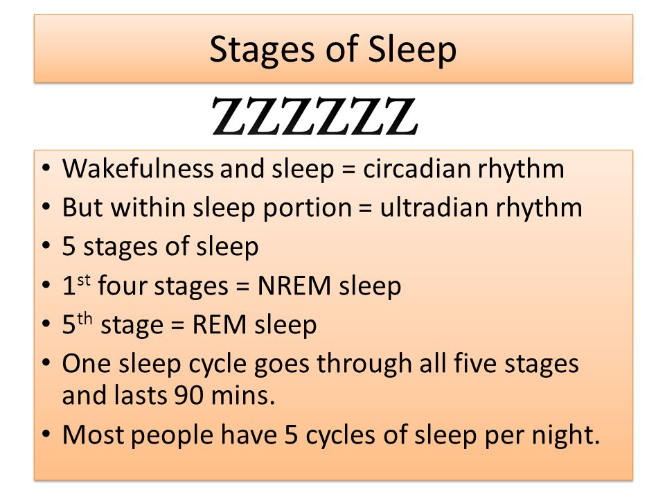 the four stages of sleep