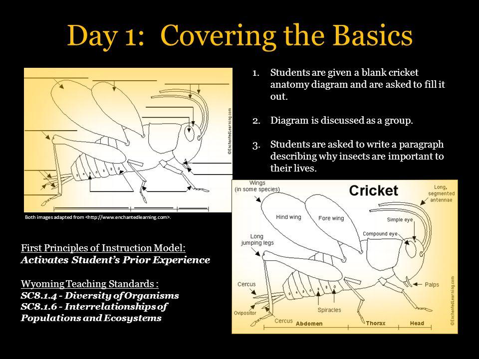Fantastisch Cricket Anatomie Diagramm Ideen - Menschliche Anatomie ...