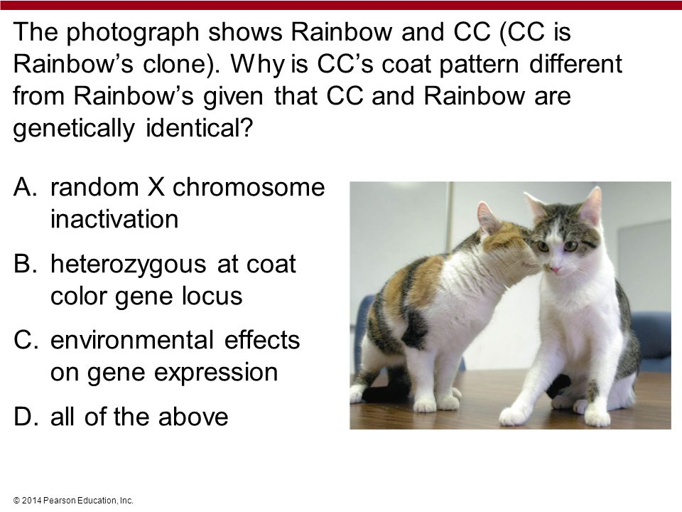 © 2014 Pearson Education, Inc. The photograph shows Rainbow and CC (CC is Rainbow's clone).