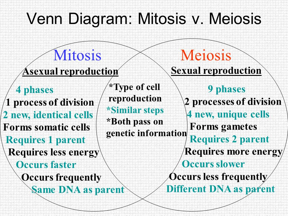 Mitosis flipbook quiz 1mitosis results in genetically 17 venn ccuart Images