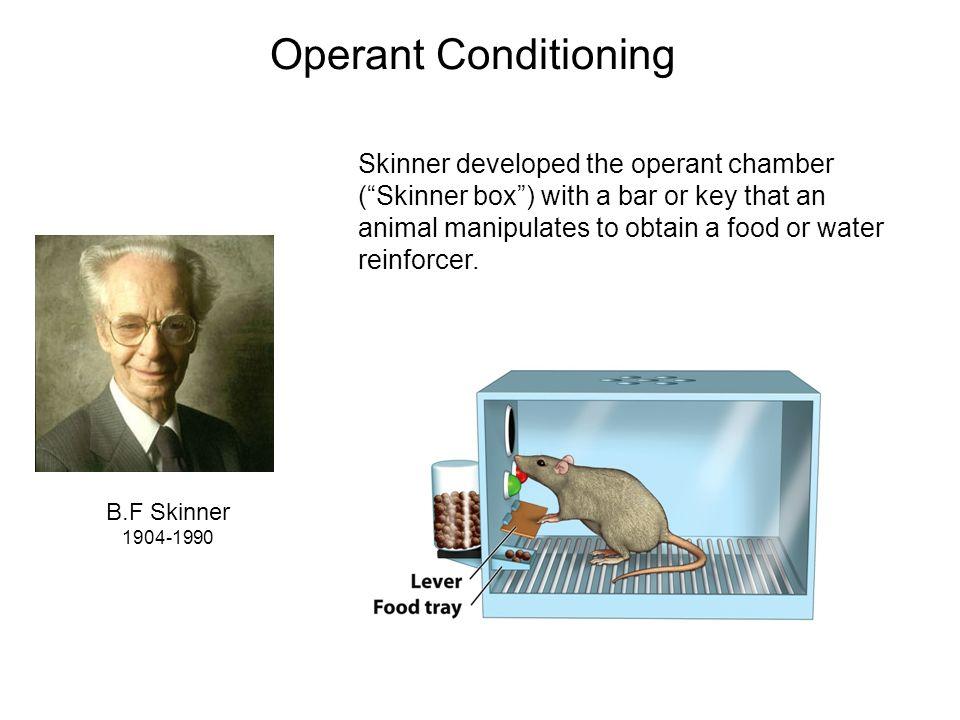 b f skinner operant conditioning