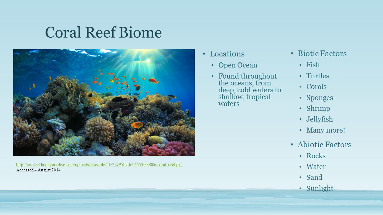 habitat destruction loss of coral reefs cristina ovalle intro to  2 coral