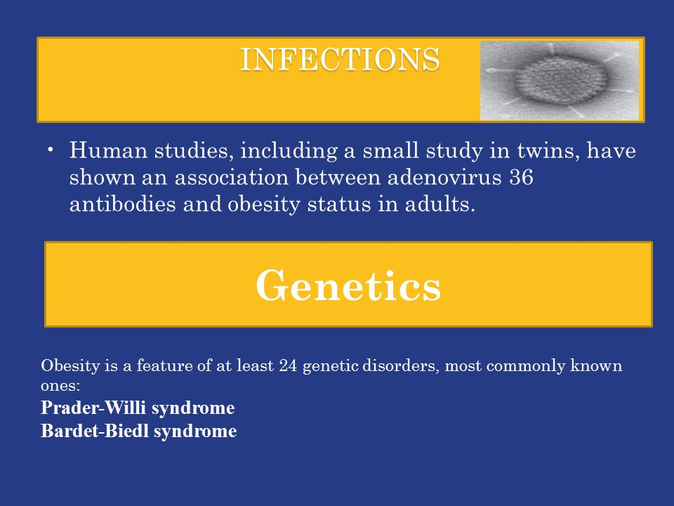 INFECTIONS Human studies, including a small study in twins, have shown an association between adenovirus 36 antibodies and obesity status in adults.