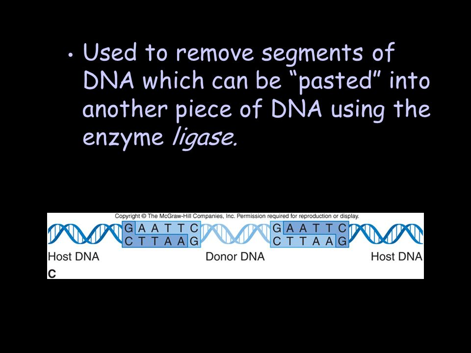 Used to remove segments of DNA which can be pasted into another piece of DNA using the enzyme ligase.