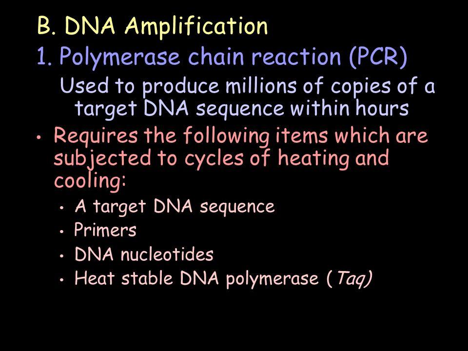 B. DNA Amplification 1.