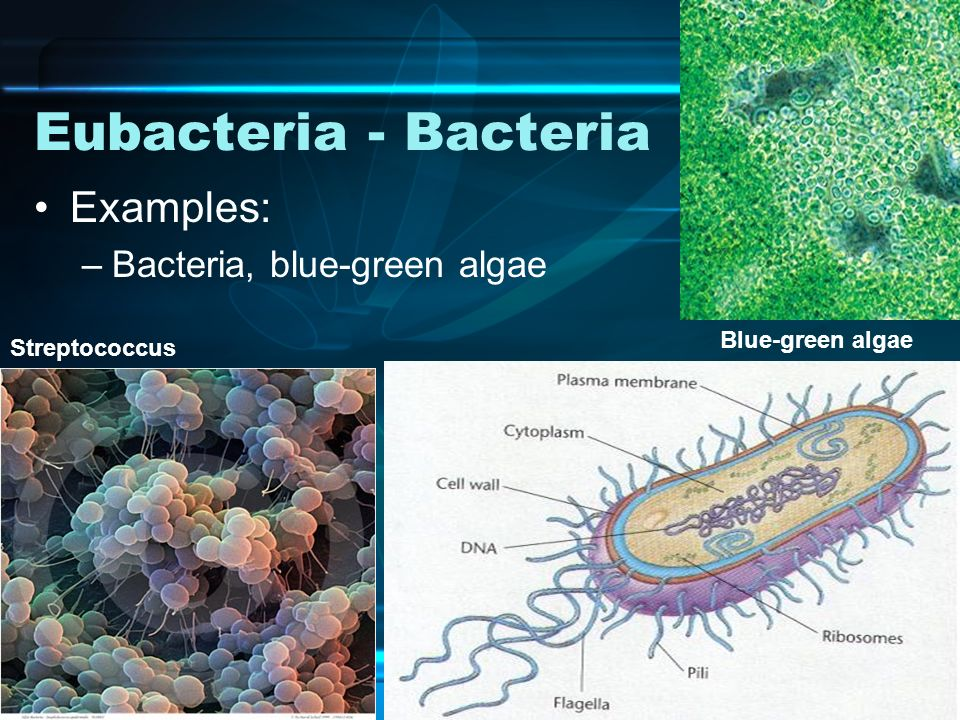 Bacteria examples