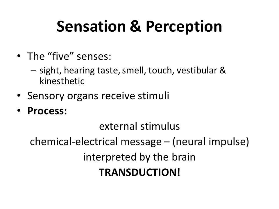 sensory details on sight sound smell taste touch