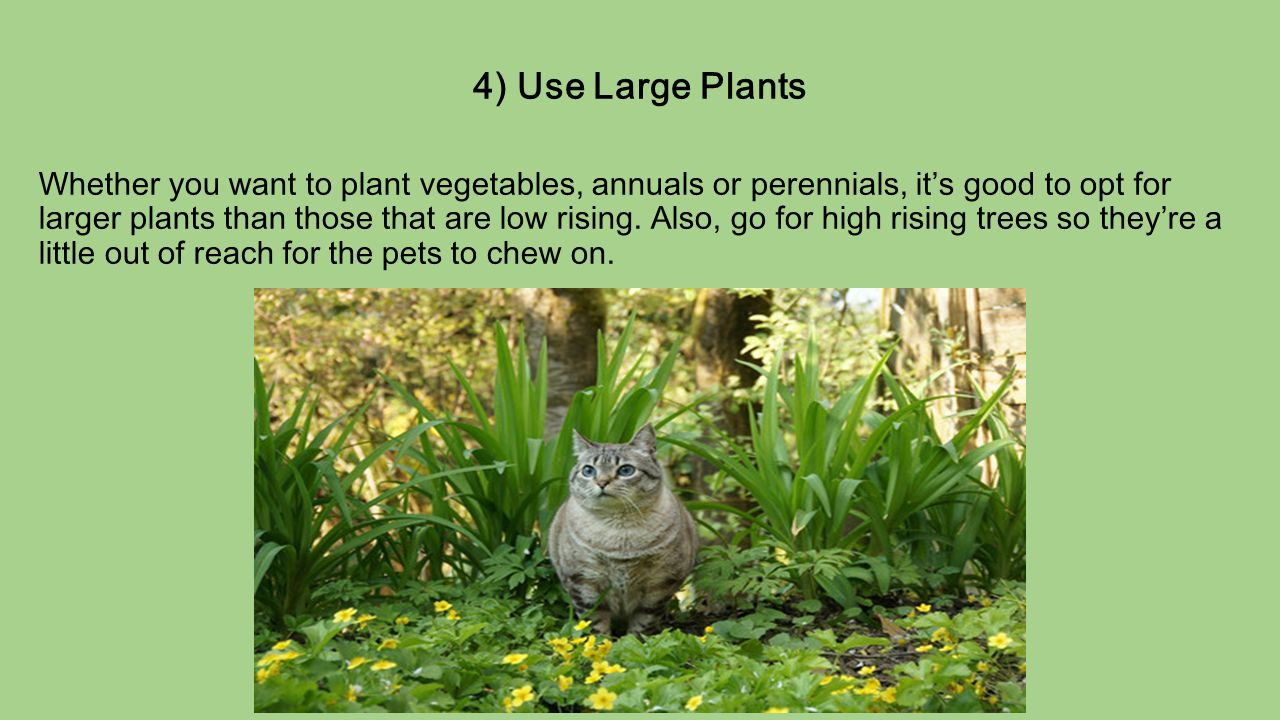 pro tips to design a pet friendly garden if you u0027re a pet owner