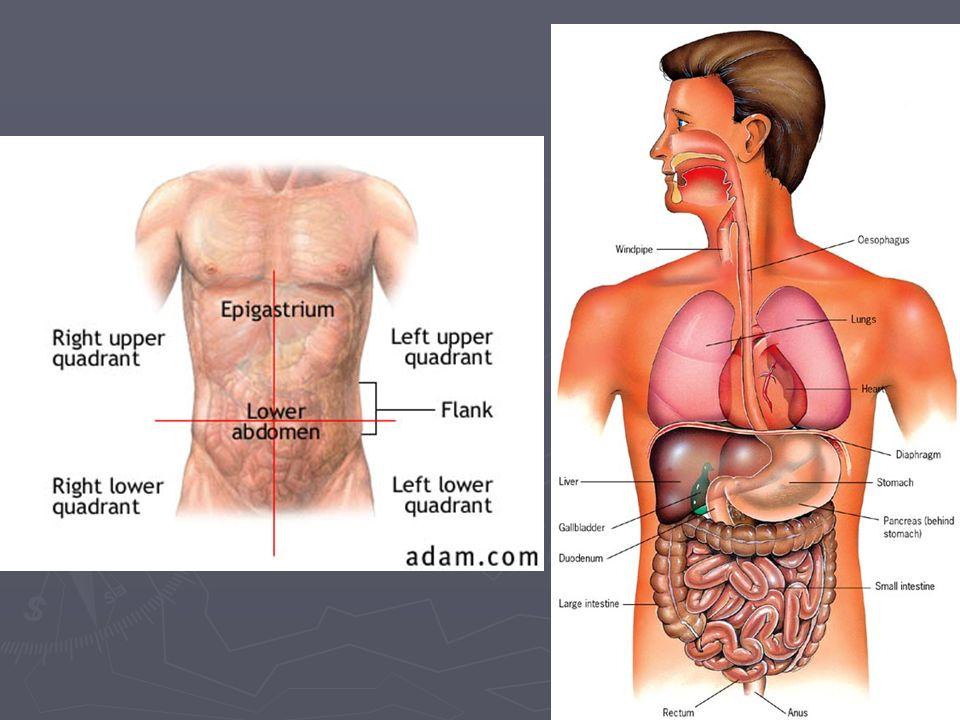 Left side anatomy