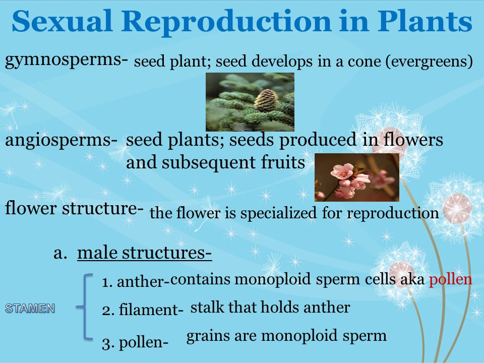 Why 2 sperm cells seed plants