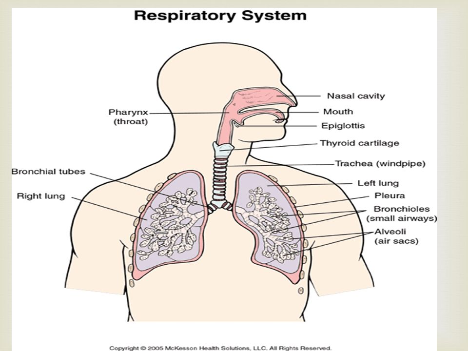 respiratory system study guide