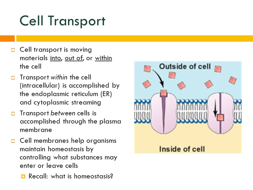 CELL HOMEOSTASIS & TRANSPORT. Cell Transport  Cell transport is ...