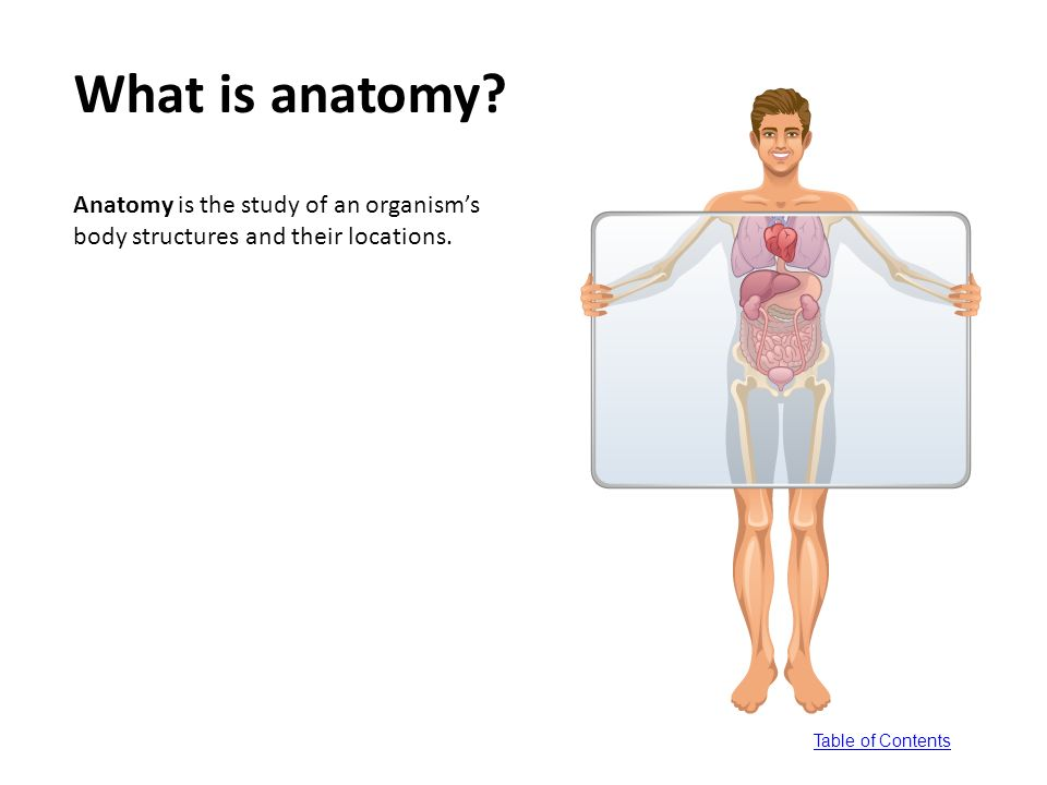table of contents. lessons 1. anatomy and physiology defined go go, Human Body