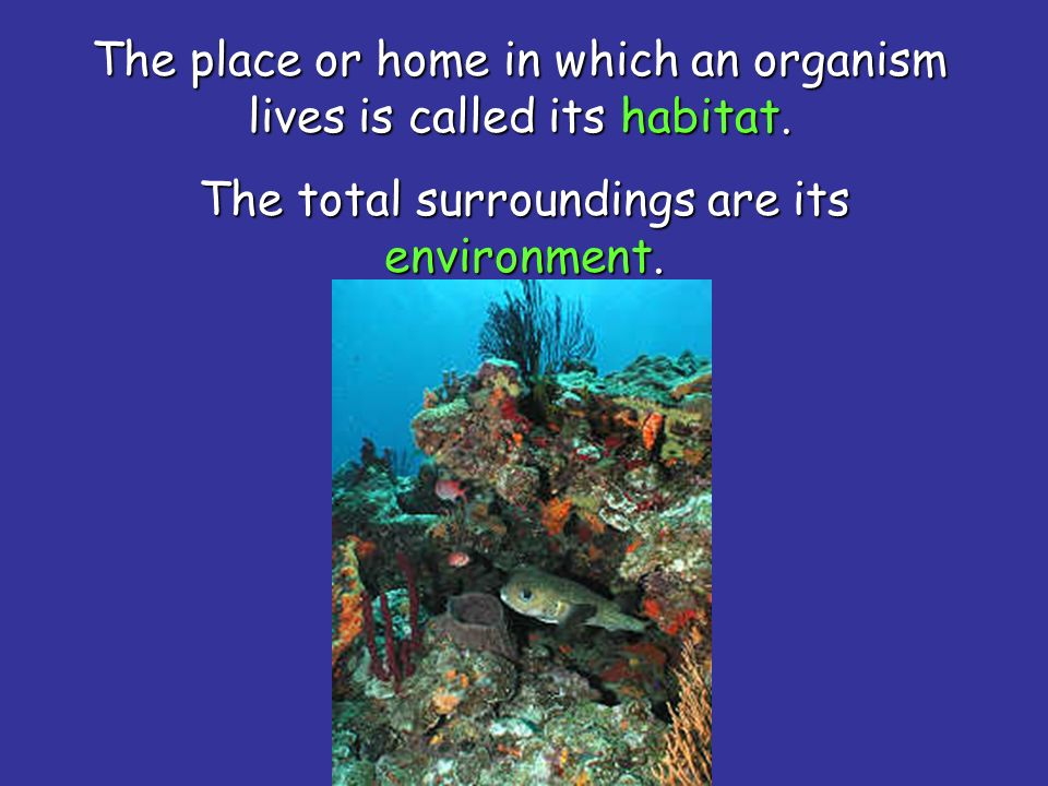 The deepest part of the ocean floor is called the ocean basin.