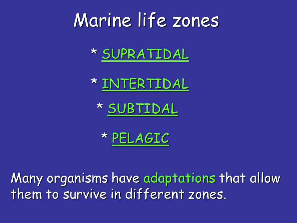 Most deep sea and commercial fishing is done in the neritic zone.